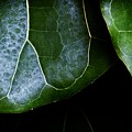 Leaf by Christopher Meade