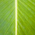 Leaf Close-up by Tomas del Amo - Printscapes