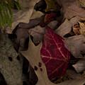 Leaf Collage by Brian Schultz