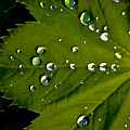 Leaf Covered In Raindrops by Amber D Hathaway Photography