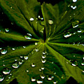 Leaf Covered With Water Droplets by Amber D Meredith Photography