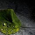 Leaf Droplets by Brad Allen Fine Art