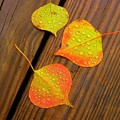 Leaf Drops 2 by Sharon Wright Duncan