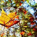 Leaf by Drue DeMatteis