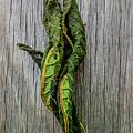 Leaf Entwined by James Aiken