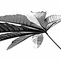 Leaf In Black And White by Elva Robinson