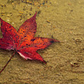 Leaf In The Rain Nature Photograph by Melissa Fague