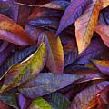 Leaf Ink Photo Designs  by Steve Spatafore