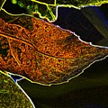 Leaf Interpretation by Norman Andrus