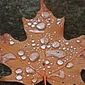 Leaf It Be by Marcel Stevahn