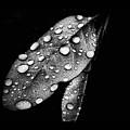Leaf It by Karen Scovill