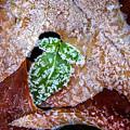 Leaf by Lijie Zhou