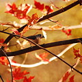 Leaf Me Alone by Lori Tambakis