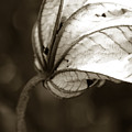 Leaf by Norah Holsten