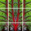 Leaf Of Life by Debi Dalio