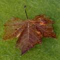 Leaf On Algae by Andrew Ford