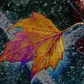 Leaf On Bricks 4 by Tim Allen