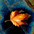 Leaf On Bricks 5 by Tim Allen