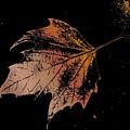 Leaf On Bricks by Tim Allen