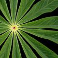 Leaf Pattern by Jean Noren