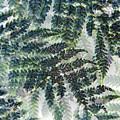 Leaf Patterns by Don Zawadiwsky