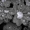Leaf Pools by Emma England