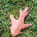 Leaf Resisting The Rain by Eibhlin Murphy