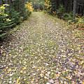 Leaf-strewn Trail by William Tasker
