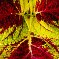 Leaf Study by Daniel G Walczyk