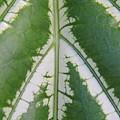 Leaf Variegated 2 by Jennifer Bright