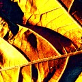 Leaf Veins Abstract by Beth Akerman