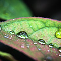 Leaf Veins And Raindrops by Robert Yaeger