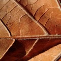 Leaf Veins by Beth Akerman
