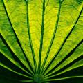 Leaf Veins by Carol Ward