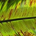 Leaf by Virginia Levasseur