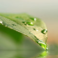 Leaf With Water Droplets by Sandra Cunningham