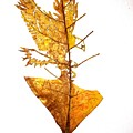 Leafcarving by Deepan Sa