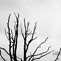 Leafless Tree by Jan Brons