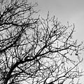 Leafless Twig by Esko Lindell