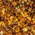 Leaves by Boris Kijevskij
