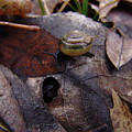Leafs With Snail 05 by Ryan Vaal