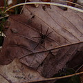 Leafs With Spider 01 by Ryan Vaal
