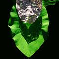 Leaf.three Layers by Viktor Savchenko