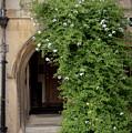 Leafy Archway  by Monika Tymanowska