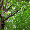 Leafy Canopy by Soni Macy