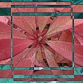 Leafy Delight 1 by Tim Allen