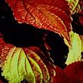 Leafy Melange by Dorota Zukowska