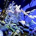 Leafy Sea Dragon by Kelly Mills