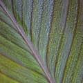 Leafy Texture by Modern Art