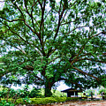Leafy Tree by Galeria Trompiz